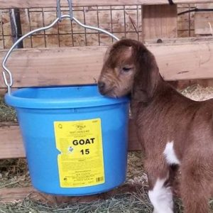 #65 Goat Choice