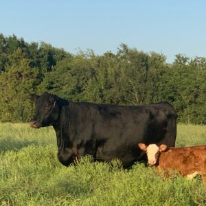 #17 Calving with MOS