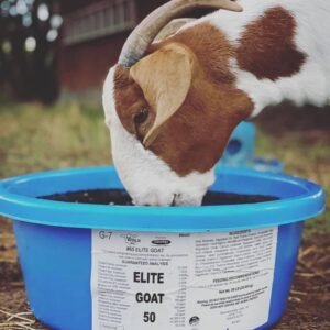 Elite Goat